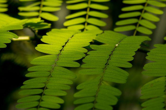 Grünes Farn