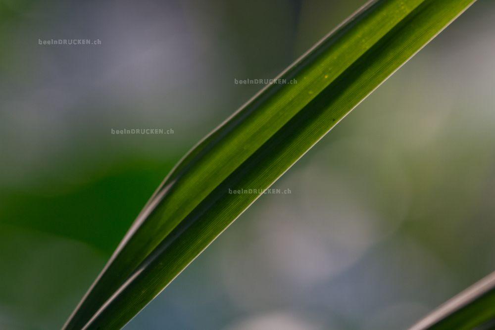 Grünes Blatt