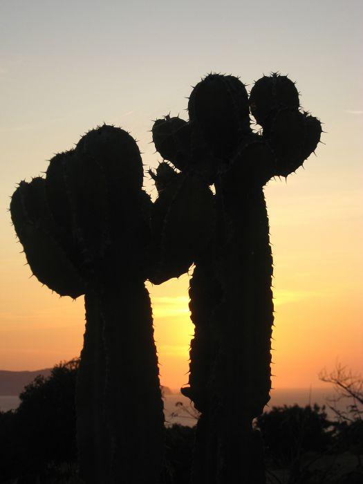 Kaktus im Sonnenuntergang