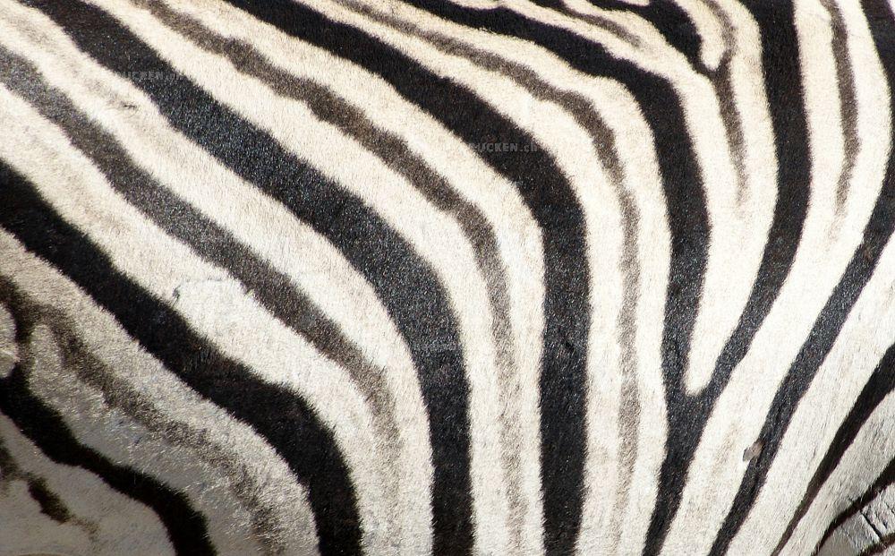 Zebramuster