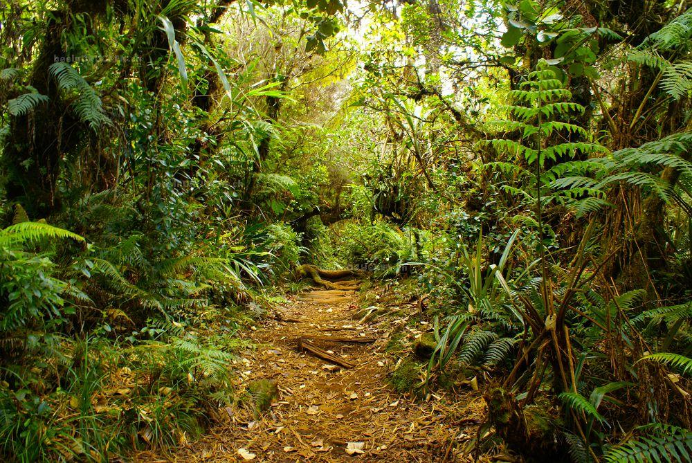 Regenwald, La Réunion
