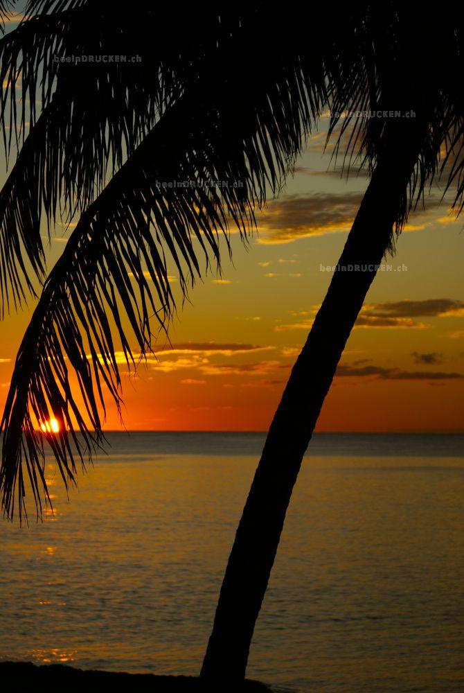 Palme im Sonnenuntergang