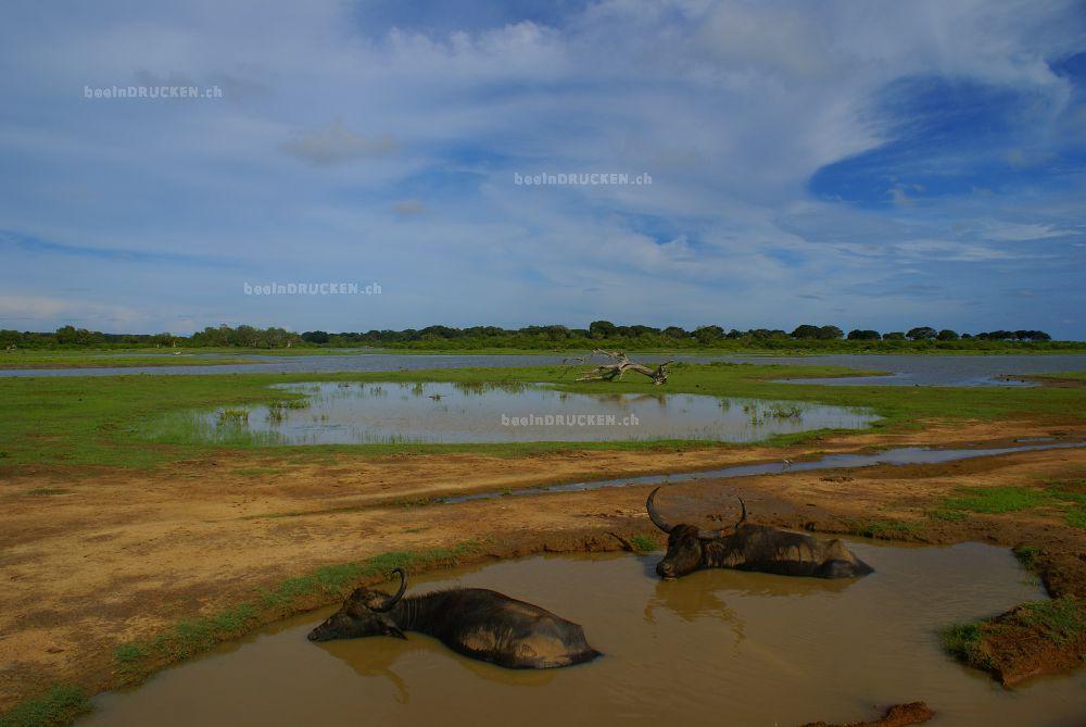 Yala NP, Sri Lanka