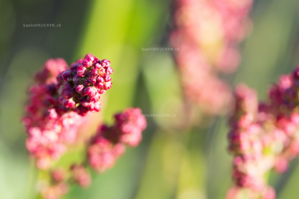 Blumenzauber II