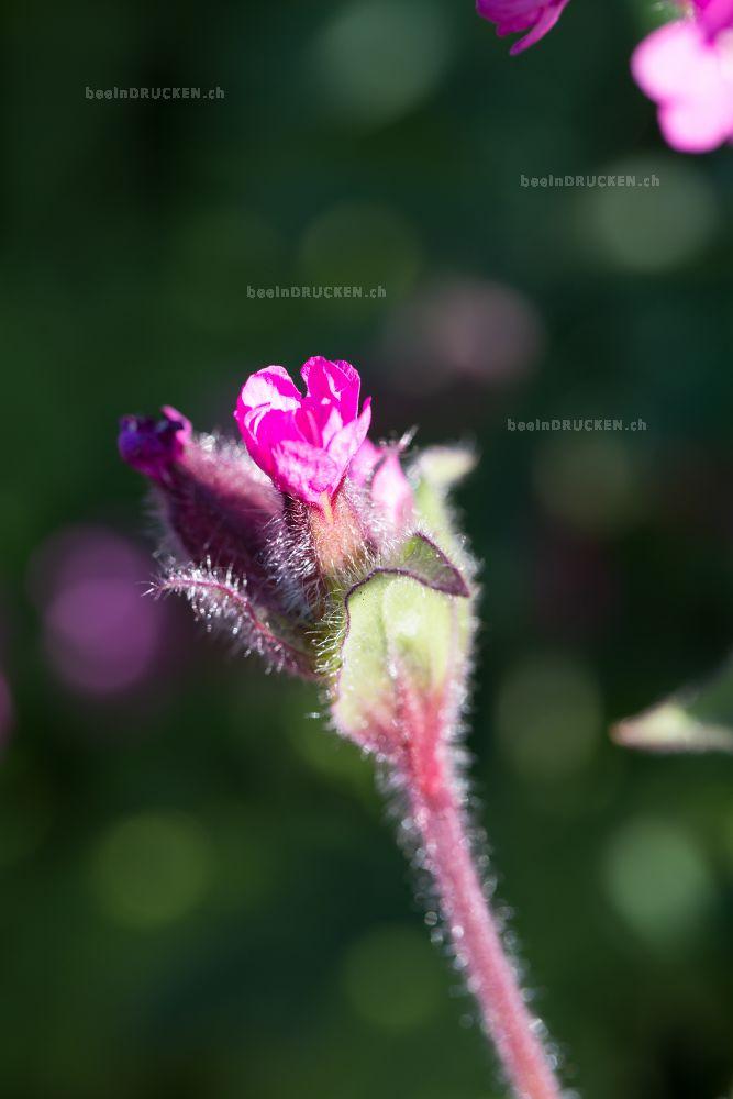 Blumenzauber III