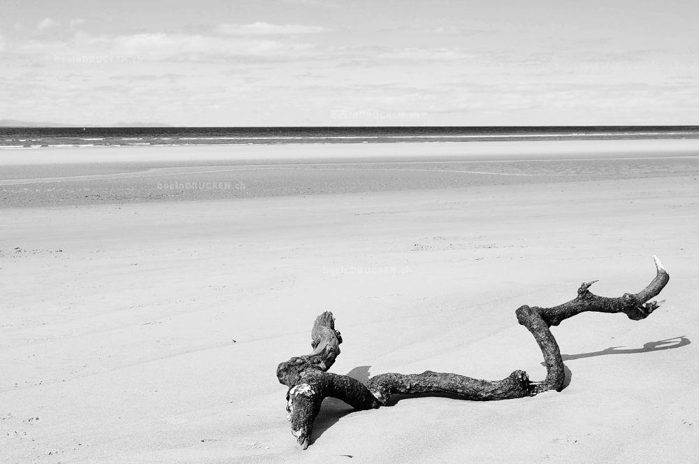 Stamm am Strand