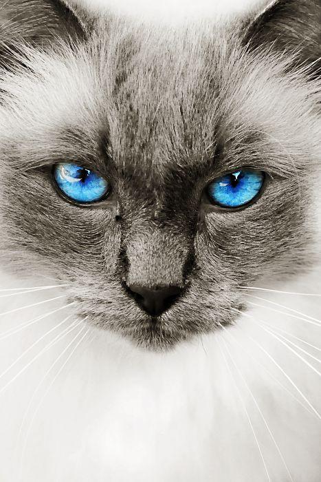 Katzenportait