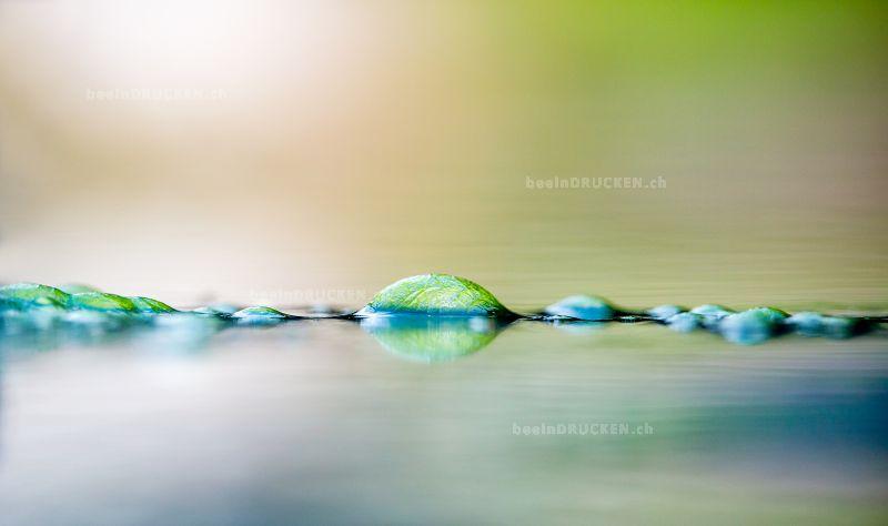 Wasseralgen