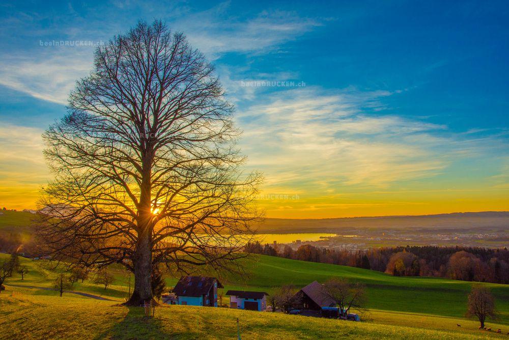 Sonnenuntergang über Zug (mit Baum)
